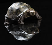 Statuette of tortoise Stock Image