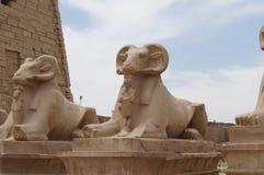 Statuy barany w Karnak świątyni Zdjęcia Royalty Free