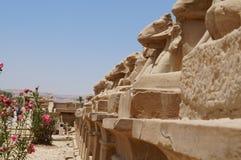 Statuy barany w Karnak świątyni Fotografia Stock