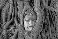 Statuy twarz Buddha otaczający z drzewem Obraz Stock