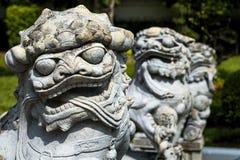 Staty av kines Foo Dog Royaltyfria Bilder