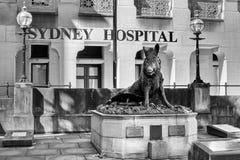 Staty för Il Porcellino, Sydney Hospital, New South Wales, Australien Arkivbild