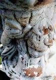 Staty för vit ängel för tappning utomhus- Royaltyfri Bild