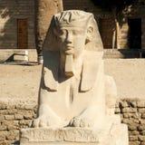 Statyer av en sfinx i Karnak Arkivbilder