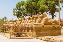 Statyer i gränden av dehövdade sfinxerna på templet av Karnak i Luxor, Egypten arkivfoton