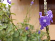 Statywowy kwiat Fotografia Stock