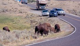 Stau der wild lebenden Tiere im Nationalpark Stockbild