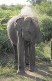 Staubiger Elefant Stockbilder