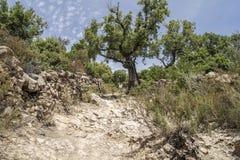 Staubiger Weg auf einem Hügel Stockfotografie