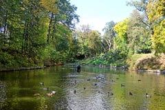Stauen Sie mit Enten im Herbstpark Oleksandriya in Bila Tserkva, Ukraine lizenzfreie stockbilder