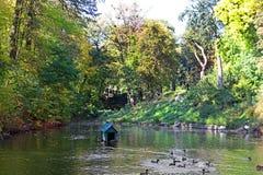 Stauen Sie mit Enten im Herbstpark Oleksandriya in Bila Tserkva, Ukraine lizenzfreies stockfoto