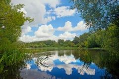 Stauen Sie mit reflektierten Wolken in der Waldsommerlandschaft Stockfotos