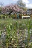 Stauen Sie mit Schilf in Klarenbeek-Park in Arnhem lizenzfreie stockfotos