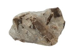 Staurolite mineral isolated Royalty Free Stock Photos