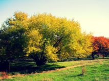 Stavropol region Zdjęcie Royalty Free