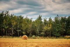 Staw bales royalty free stock photography