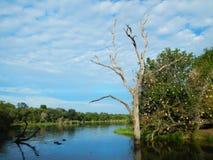Staw i światło słoneczne, afrykańska sawanna, Kruger, Południowa Afryka Fotografia Stock
