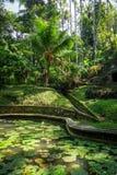 Staw i d?ungla w Goa Gajah s?oniu zawalamy si? ?wi?tyni?, Ubud, Bali, Indonezja zdjęcia stock