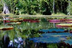 Staw, jezioro z wodnymi lilis Fotografia Royalty Free