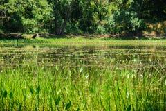 Staw lokalizować w lesie i otaczający zielonymi roślinami zdjęcia royalty free