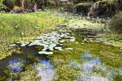 Staw przerastający z lotuses, Nusa Penida w Indonezja obrazy stock