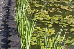 Staw przerastający z wodnymi lelujami zdjęcia stock