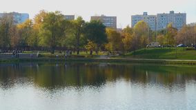 Staw w miasto parku zdjęcie wideo