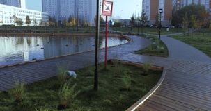 Staw w miasto parku zbiory