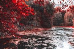 Staw w parku, żywi czerwoni kolory obraz stock