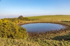 Staw w Sussex wsi zdjęcia royalty free