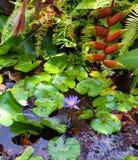 Staw z egzotycznymi tropikalnymi roślinami obraz stock