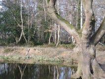 Staw z lasowymi drzewami i odbiciem Obrazy Royalty Free