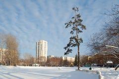 Staw zakrywający z śniegiem, treesand i budynkami, 09 01 2019 obrazy royalty free