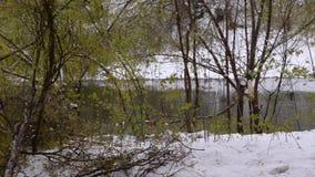 Staw, zieleni drzewa brzeg staw zakrywający z śniegiem Anomalia natura zdjęcie wideo