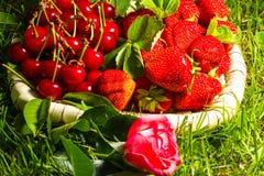 Stawberry, cerise et s'est levé Photographie stock libre de droits