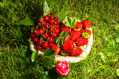 Stawberry, cherry and rose Royalty Free Stock Images