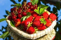 Stawberry y cereza Fotos de archivo