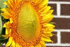 Stawiać czoło słońce Zdjęcia Royalty Free