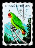 Stawiający czoło Lovebird, ptaka seria około 1993, (Agapornis pullaria) Fotografia Royalty Free