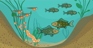 Stawowy ekosystem i etap życia ryba Sekwencja sceny rozwój ryba od jajka dorosły zwierzę ilustracji