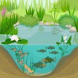 Stawowy ekosystem i etap życia ryba Sekwencja sceny rozwój ryba od jajka dorosły zwierzę royalty ilustracja
