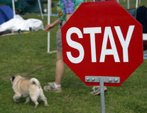 Stay. A sign tells dogs what to do. They don't listen stock images