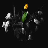 Staying power. Conceptual image of flower staying alive among others withered Royalty Free Stock Photography