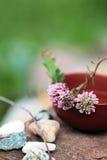 Stazione termale con i fiori del trifoglio e le pietre bianche Fotografia Stock Libera da Diritti