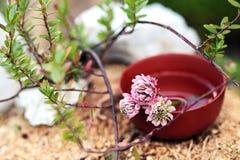 Stazione termale con le pietre ed i fiori del trifoglio Immagini Stock