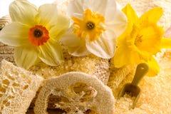Stazione termale dei Daffodils Fotografia Stock Libera da Diritti