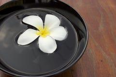 Stazione termale del fiore. Fotografia Stock Libera da Diritti