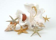 Stazione termale del Seashell Fotografia Stock