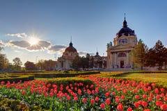Stazione termale di Szechenyi con il fiore - Budapest, Ungheria fotografia stock libera da diritti