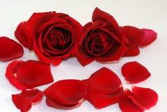 Stazione termale rossa dei petali del fiore della Rosa aromatherapy fotografie stock libere da diritti